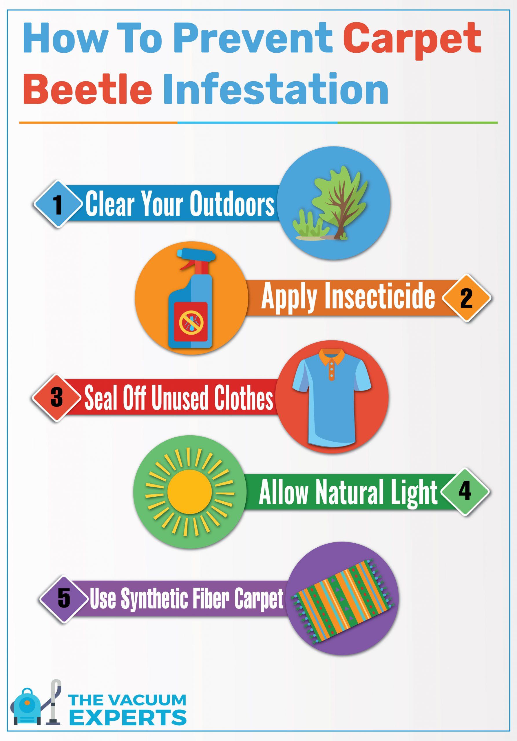 how to prevent carpet beetles checklist